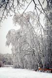 The ice park