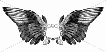Engraved Black Wings