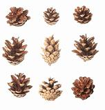 Set of pine cones