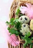 quail eggs with green grass and feathers Easter still life