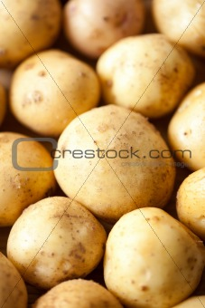 Potatoes close-up
