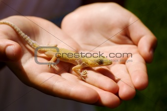 Child holding lizard