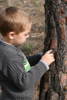Boy chipping bark