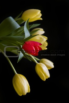 Single red tulip amongst bouquet of yellow tulips