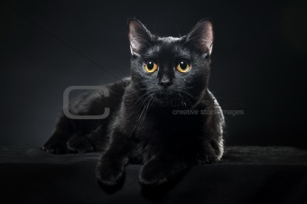 British black cat