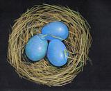 Color Pencil Drawing of Bird's Eggs in Nest