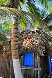 coconut palm trees palapa hut beach