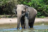 Elephant having bath