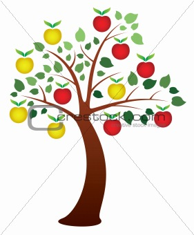 apple tree with fruits