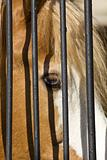 Horse in captivity