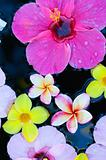 Tropical flowers in water
