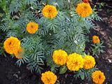 Beuty flowers.
