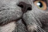Cats nose