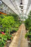 Flowers in modern greenhouse - houseplants