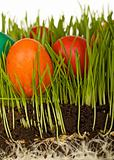 The science of easter eggs in the grass