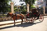 Horse and cart in Havana