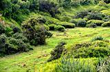 Plateau of Parque natural de Madeira, Madeira island,  Portugal