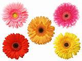 five daisy