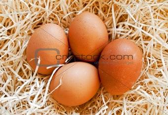 Four heg eggs