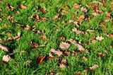 grass texture with leaves in autumn