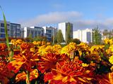 City flowerbed. Beautiful flowers on a background of