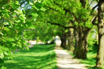 summer tree alley
