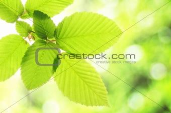 green summer leaf