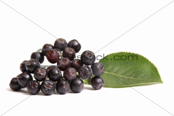 Aronia - Black Choke-berry (Aronia melanocarpa)