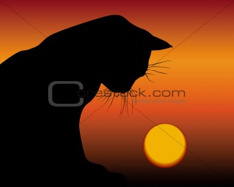 black cat and the setting sun