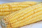 Cob of the ripe corn