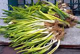 Fresh Chinese Leeks