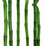 Six stems of bamboo against white background
