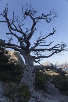 black single tree on the mountain