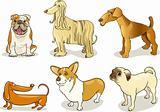 purebred dogs