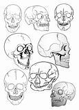 vector various skulls