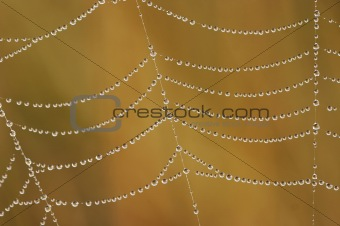 beads of dew on the cobweb