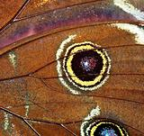 Abstract - Detail of butterfly wings