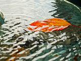 Golden leave floating in water