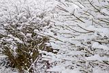 Winter Snow on Deciduous Plant