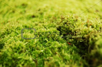 green dosh in the forrest
