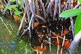 mangrove swamp tropical water detail