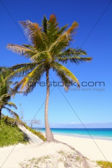 Caribbean coconut palm trees in turquoise sea