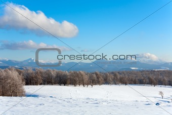 First winter snow and mountain beech forest