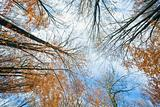 Autumn sky and tree tops