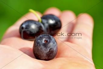 Black olives on hand .