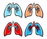 Lung Anatomy, bronchi, human medical illustration, 4 emblem, sch