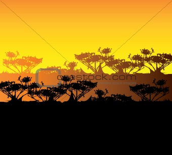 Tourism, travel background, Kenya, savanna silhouette. Africa la
