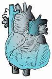 Heart Medical Illustration