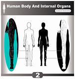 Human Body Internal Organs muscles back