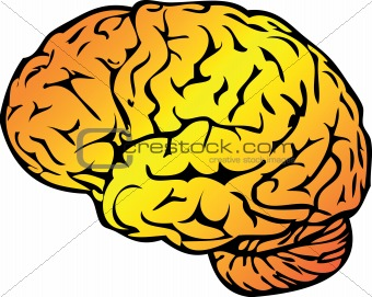 Anatomy Vector Medical illustration, human brain